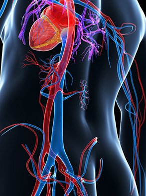 terumo interventional systems